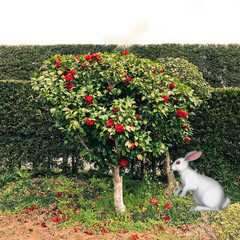不思議の国のアリス/庭 庭に赤い椿が綺麗に咲いていました☆ なん…