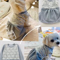 犬服/犬服ハンドメイド/リメイク/マルチーズ/ハンドメイド/ファッション エマちゃんに久々リメイク服プレゼント🎁 …
