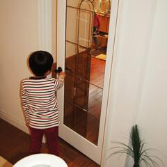 ドア/木製/ガラス/輸入ドア 毎日手に触れる場所にこそこだわりを持ちた…