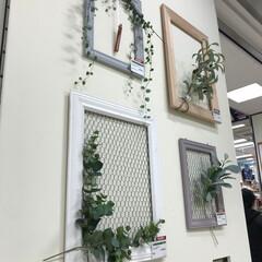 モールディング/DIY/植物/グリーン/アートフレーム/フレーム 海外の建築資材であるモールディングで作っ…