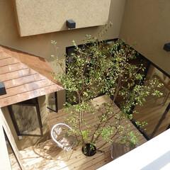 中庭/ウッドデッキ/木の家 家の中央にあるウッドデッキの中庭は、部屋…