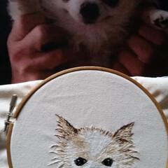ハンドメイド201606/ハンドメイド/刺繍/オリジナル/オンリーワン/新作/... 愛犬そっくりの刺繍をしています。 これか…