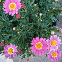 お花のある暮らし 玄関前のお花も 咲いてきました❤(ӦvӦ…