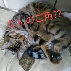 猫のいる暮らし/猫と暮らす  こんにちは(*^^*)  たまにはうち…