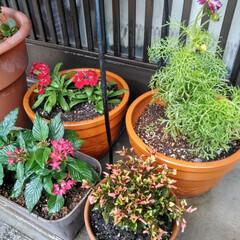 玄関 玄関を 秋らしい お花に植え替えヽ(^。…