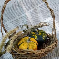 ドライフラワー/かぼちゃ/100均/セリア/家計簿 産直のお店で ミニミニなかぼちゃを発見!…