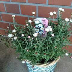 花かんざし/暮らし/フォロー大歓迎  こんにちは(*^^*) 花かんざしゲッ…