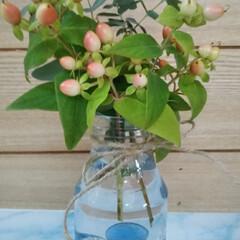 おうちごはん/簡単/暮らし  こんにちは(*^^*)  植木鉢で育て…