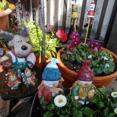 クリスマス/雑貨/100均/ダイソー 秋に植えたお花も終わったので デージーと…