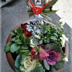 お正月/セリア/寄植鉢  こんにちは(*^^*)  お義母さんに…