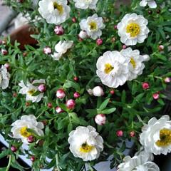 花かんざし/暮らし  おはようございます(*^^*)  先日…