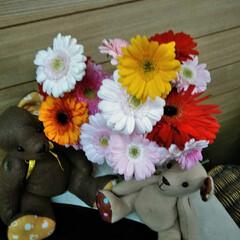 お花 お隣りさんからの いただき物😍  ガーベ…