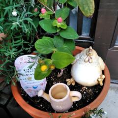 フォロー大歓迎/LIMIAファンクラブ/至福のひととき/暮らし/セリア 春のお花も終わったので 植え替えしました…(8枚目)