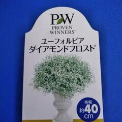 とうがらし/寄せ植え/季節インテリア  こんにちは(*^^*)  新しい寄せ植…(2枚目)