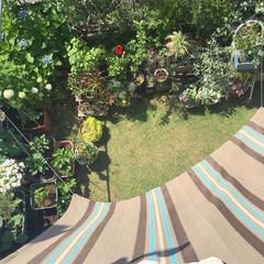 タープ/紫陽花/ハイビスカス/プランター菜園/家庭菜園/寄せ植え/... 本日は晴天なり ー♪ 今日は 洗濯三昧 …