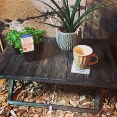 無料ワークショップ/ミニテーブル/フラワースタンド/作業椅子/サフィニア/DIY/... 「花がないときには作業椅子にも!お花をき…(1枚目)