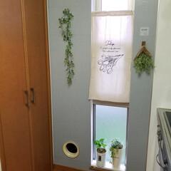 汚れを隠すため/キッチン/インテリア/モルタル柄/リメイクシート/DAISO/... Kitchen横の壁  汚れがひどいこと…(2枚目)