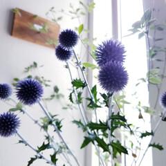 お花大好き/暮らしを楽しむ/暮らし/インテリア/嬉しいな/サービス/... 今日は仕事帰りに お花屋さんに寄りました…(4枚目)