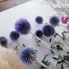 お花大好き/暮らしを楽しむ/暮らし/インテリア/嬉しいな/サービス/... 今日は仕事帰りに お花屋さんに寄りました…(7枚目)