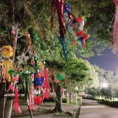 月/健康/夫婦/ウォーキング/公園/飾り/... ここ1ヶ月半  健康のために毎晩旦那さん…(3枚目)