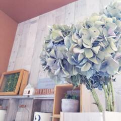 頂き物/100均だらけ/100均/玄関インテリア/お花のある暮らし/ドライフラワーのある暮らし/... 母がご近所さん宅に咲いている 素敵なあじ…(5枚目)