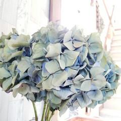 頂き物/100均だらけ/100均/玄関インテリア/お花のある暮らし/ドライフラワーのある暮らし/... 母がご近所さん宅に咲いている 素敵なあじ…(6枚目)
