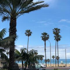 ハンティントンビーチ/西海岸/アメリカ/フォロー大歓迎/おでかけ/旅行/... アメリカ西海岸ハンティントンビーチ  す…(2枚目)
