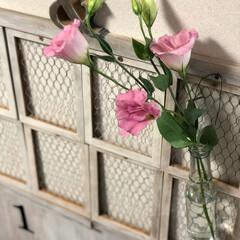 ガラス瓶/トルコキキョウ/花/100均/DIY お友達からお花を💐いただきました トルコ…
