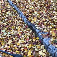 落ち葉の絨毯/落ち葉/LIMIAおでかけ部/フォロー大歓迎/おでかけ/おでかけワンショット 落ち葉の🍂絨毯  上を歩くとザクッザクッ…