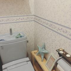 バーンスター/トイレ/壁紙/フォロー大歓迎/雑貨/わたしのお気に入り トイレの壁紙は 家を建てた時に私が選んだ…