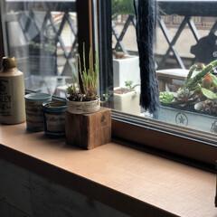 ソテツ/フラワーボックス/窓際/グリーン/雑貨/多肉ちゃん リビング窓際外には フラワーボックスを設…