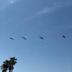 ハンティントンビーチ/カモメ/GW/おでかけ/旅行/風景/... カルフォルニアハンティントンビーチ  上…