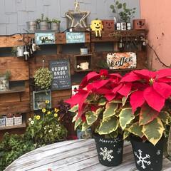 鉢リメイク/パレットガーデニング/ポインセチア/クリスマス クリスマスと言えば ポインセチアですよね…