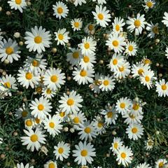 道端/植物/花/小さい春/おでかけ/風景 久しぶりに地元に帰って 道をあるいていた…