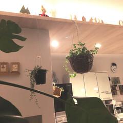 観葉植物/間接照明/ボタニカル/雑貨/100均/セリア/... 北欧インテリアに憧れ中。 檜のムーミンは…