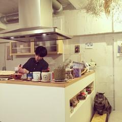 カフェ/カフェ風/キッチン/カウンター/キッチンカウンター/猫/... 大きなレンジフードのついたカウンターキッ…