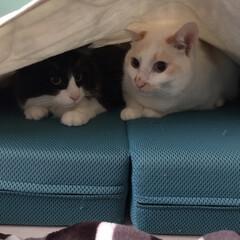 ニャンコ同好会/保護猫 ご無沙汰です😅 最近はLIMIA覗きにく…