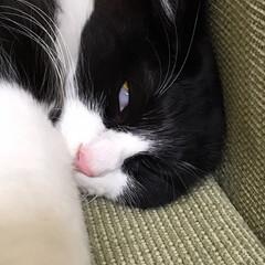 保護猫/もんじ君/はちわれ猫/にゃんこ同好会 可愛い寝顔からの白目のもんちゃんww(2枚目)