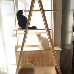 キャットタワー/ソーホースブラケット/保護猫/にゃんこ同好会/DIY 今までウチには無かったキャットタワーを作…