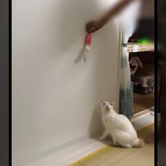 保護猫/満福君/白猫/LIMIAペット同好会/にゃんこ同好会 JUMP‼️  ボヤけちゃっう〜💦皆さん…