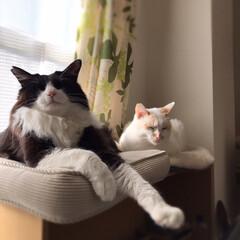 「今日は2猫仲良く並んで日向ぼっこ。 猫達…」(1枚目)