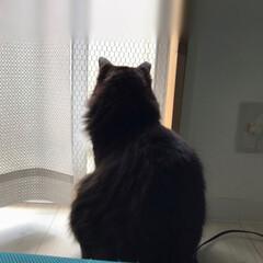 白猫/はちわれ猫/保護猫/にゃんこ同好会 今日は予定の無いお休み☺️ そんな日は普…