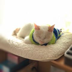 満福君/白猫/保護猫/ペット/猫/にゃんこ同好会 蛇マフラー🧣もふもふあったか☺️  首輪…(2枚目)