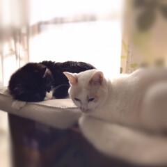 「今日は2猫仲良く並んで日向ぼっこ。 猫達…」(2枚目)