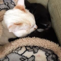 白猫/はちわれ猫/にゃんこ同好会/保護猫 寒くなってきたね。
