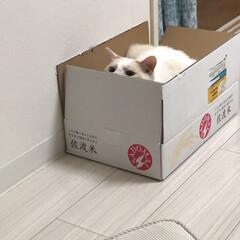 白ねこ/ニャンコ同好会/猫/佐渡米 今日は僕がいただき!  もんちゃんが来な…(1枚目)