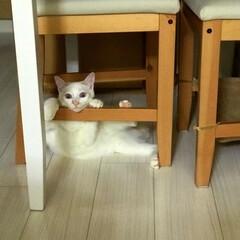 巻きしっぽ/満福君/保護猫/猫/にゃんこ同好会 ちょいとひと休み😍