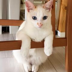 保護猫/ペット/猫/にゃんこ同好会 ちょこんとしてます(〃ω〃)