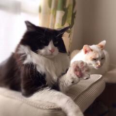 「今日は2猫仲良く並んで日向ぼっこ。 猫達…」(3枚目)