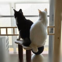 お見舞い申し上げます/台風/ハチワレ/白猫/にゃんこ同好会/保護猫 台風被害に遭われた方々にお見舞い申し上げ…